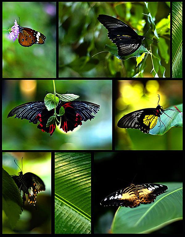 Butterflyboard jon tip
